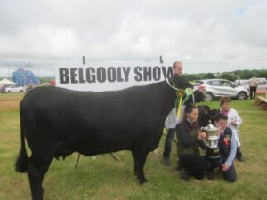 Belgooly Show 2018 picture of large black cow with winning cup
